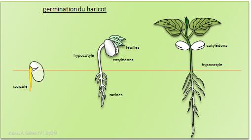 les sciences | thème 2 : les végétaux