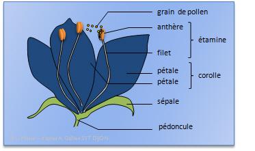 Les Sciences Net Theme 2 Les Vegetaux