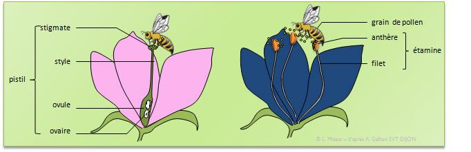 de fleur en fleur